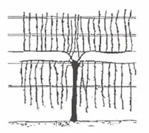 Scot henry pruning