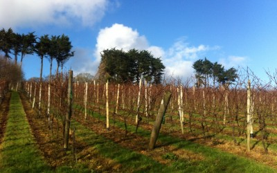 Pruning activities in the Vineyard