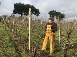 Pruning at Polgoon